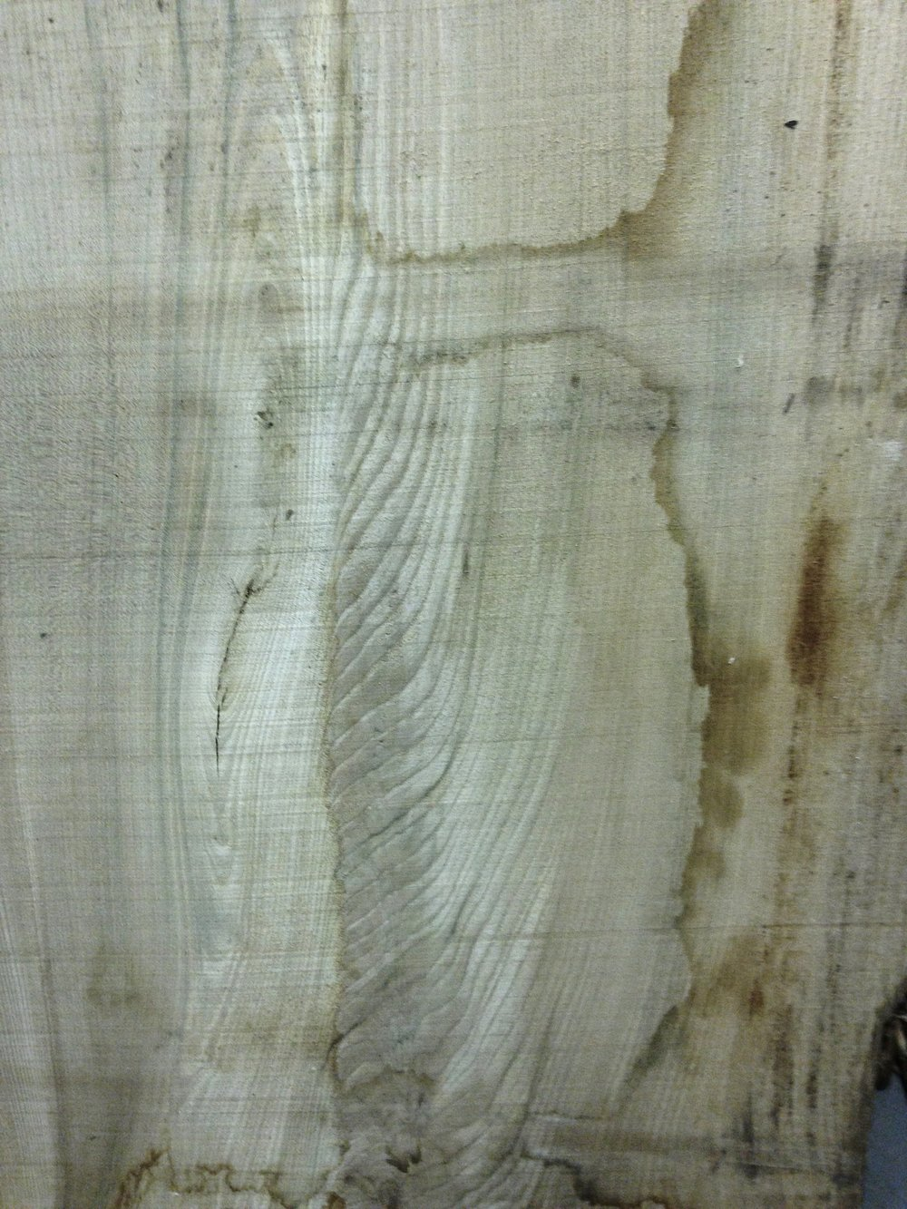 Elm: wild flame pattern, the top..perhaps?