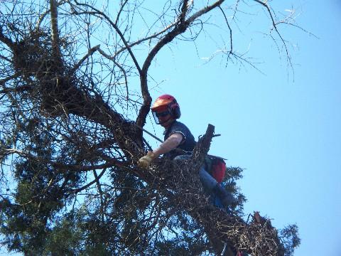 treecare_services10.jpg