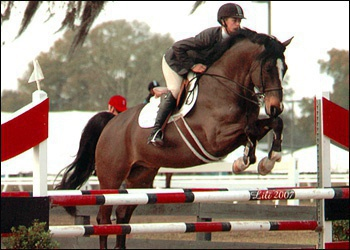 Oliver Twist.  Big eq and 1.40m jumper.