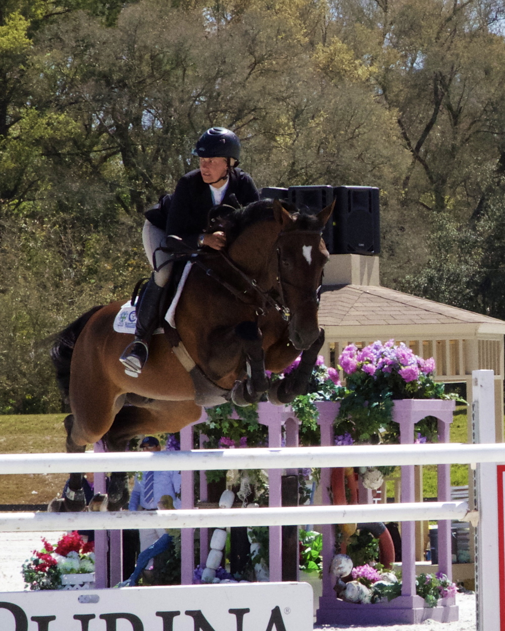 Child Z - Placings in Grand Prix and Amateur Jumpers