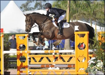 Profyta Velvet VDL- Hi Jr Jumper & Eq winner