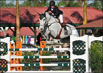 Attraction - Champion Jr Jumper