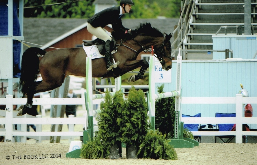 VDL Electra - 2009 mare... Ribbon winner 7 yr old YJC classes and 1.30m... currently competing with an amateur.