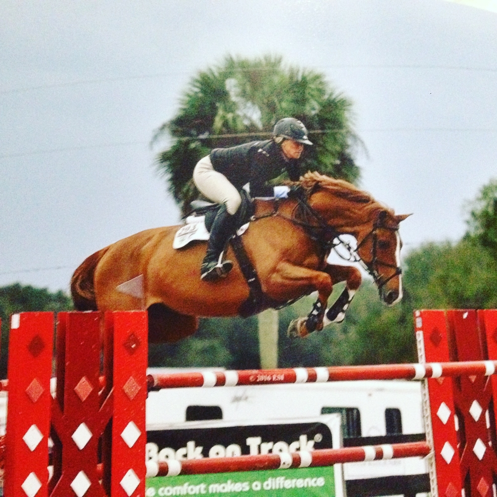 Eldorado VDL - 2009 Corland x Sheraton currently competing in 1.40m and 7 yr old classes.