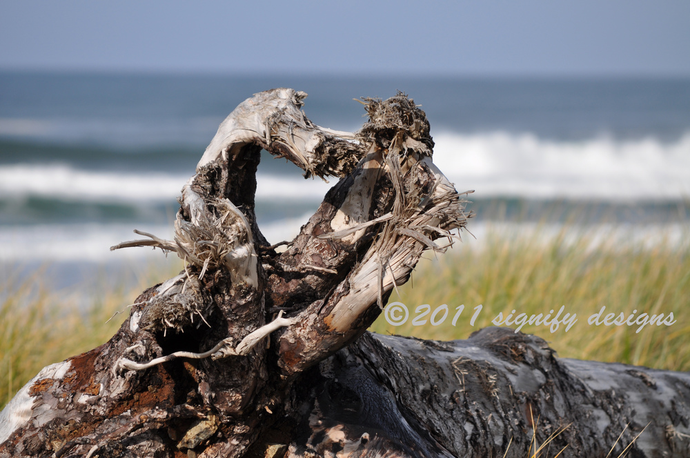 "800x600      I happened upon this fallen tree at the Oregon Coast, whose upturned roots were in the shape of a heart. It was so remarkable to me that God would put reminders of his love even in the roots of trees! His promises are over all creation … sometimes very obvious, sometimes hidden from view …and sometimes ""so faint you wouldn't even know it was there unless you were looking for it."" (Shari MacDonald Strong)     Normal   0           false   false   false     EN-US   X-NONE   X-NONE                                  MicrosoftInternetExplorer4                                                                                                                                                                                                                                                                                                                                       st1\:*{behavior:url(#ieooui) }    /* Style Definitions */  table.MsoNormalTable 	{mso-style-name:""Table Normal""; 	mso-tstyle-rowband-size:0; 	mso-tstyle-colband-size:0; 	mso-style-noshow:yes; 	mso-style-priority:99; 	mso-style-parent:""""; 	mso-padding-alt:0in 5.4pt 0in 5.4pt; 	mso-para-margin:0in; 	mso-para-margin-bottom:.0001pt; 	mso-pagination:widow-orphan; 	font-size:10.0pt; 	font-family:""Times New Roman"",""serif"";}"