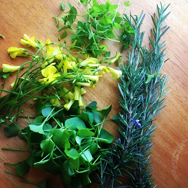 I wonder what else is growing in my yard? Foraged sorrel flowers, rosemary, miners lettuce, chickweed. ✂ it will be on your dinner plate tmrw! #wildthings #foraging #food #foodporn  (at Soup Mama Mel's Kitchen)