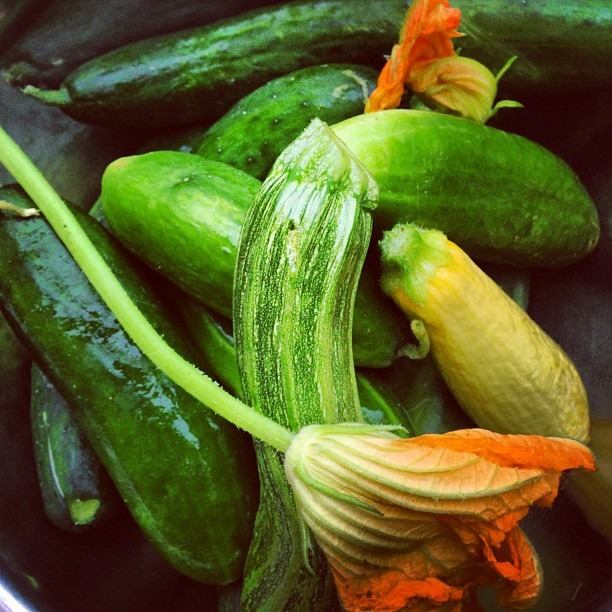 Gifts from Farmer Annie! Beautiful squash blossoms, cucumbers, zucchini #moonfoxfarm #pickleprojects #farmfresh #soupmama (at Soup Mama Mel's Kitchen)