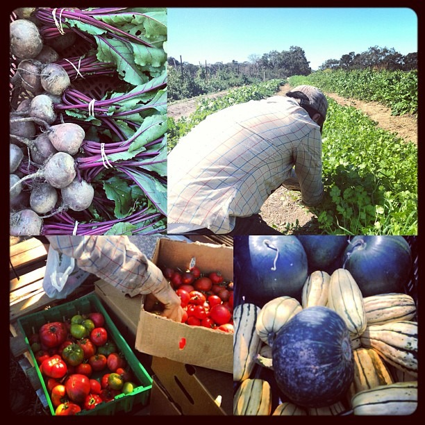 Visiting Annie on her farm: Moon Fox Farm #fresh #farmlife #moonfoxfarm #biodynamic #petaluma #latergram #soupmama
