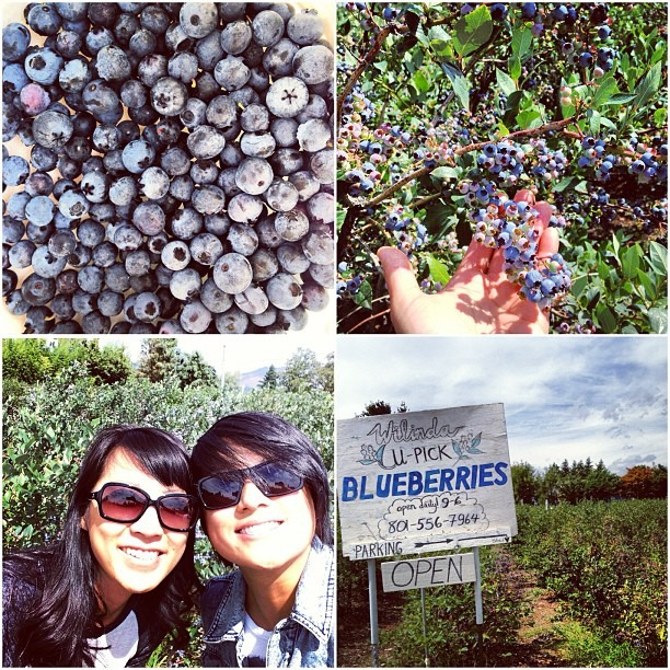 Blueberry picking @organizedtourist  (at Mt. Hood)