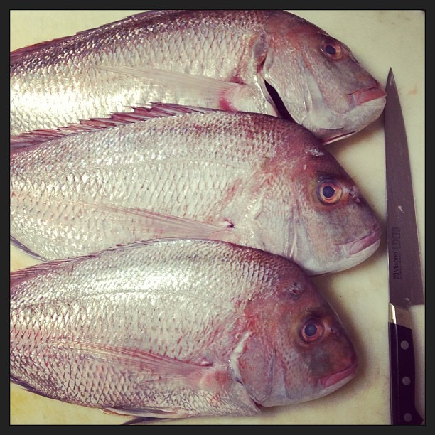 Hey there pretty boys #snapper #butchery  (at Luce)