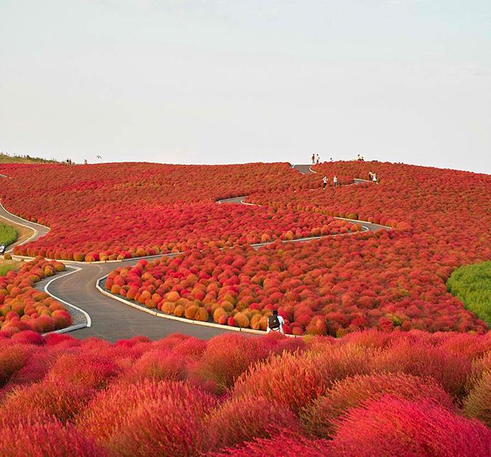 Hitachi National park, Japan