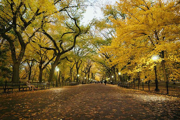 Central Park Mall, NY