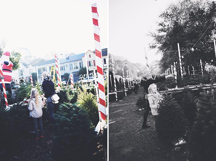 tree37.jpg