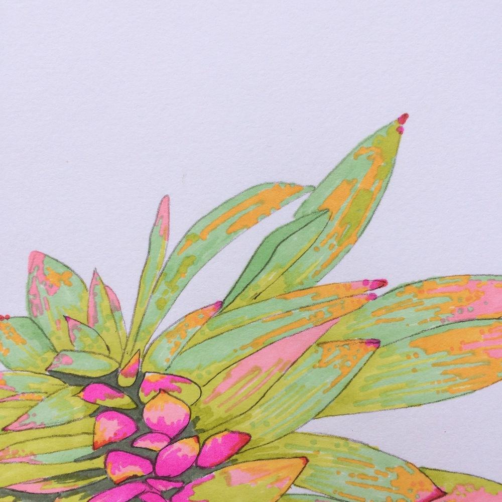Lana Fee Rasmussen sketch succulent