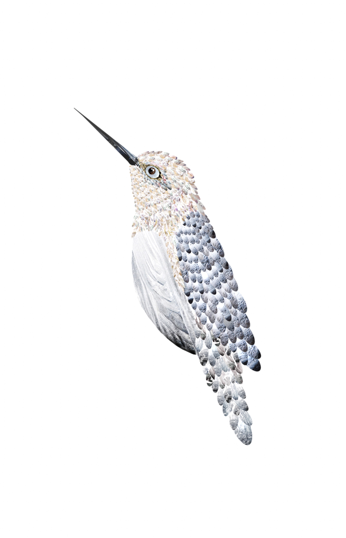 Bird_02.jpg