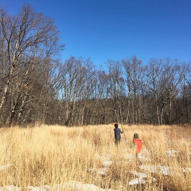 Weekends are best spent exploring new parks. Lukas and Noah enjoyed the easy trails at the Rockefeller State Park Preserve  #waterandlightning #naturechild #childrenunplugged #familytrails