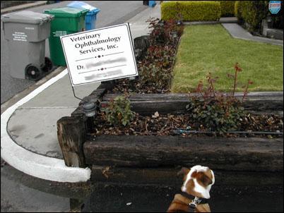 vet_visit_7.jpg