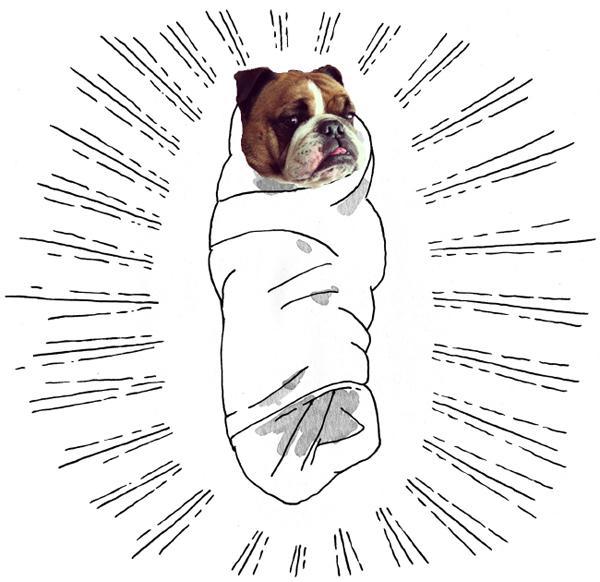 swaddled dog