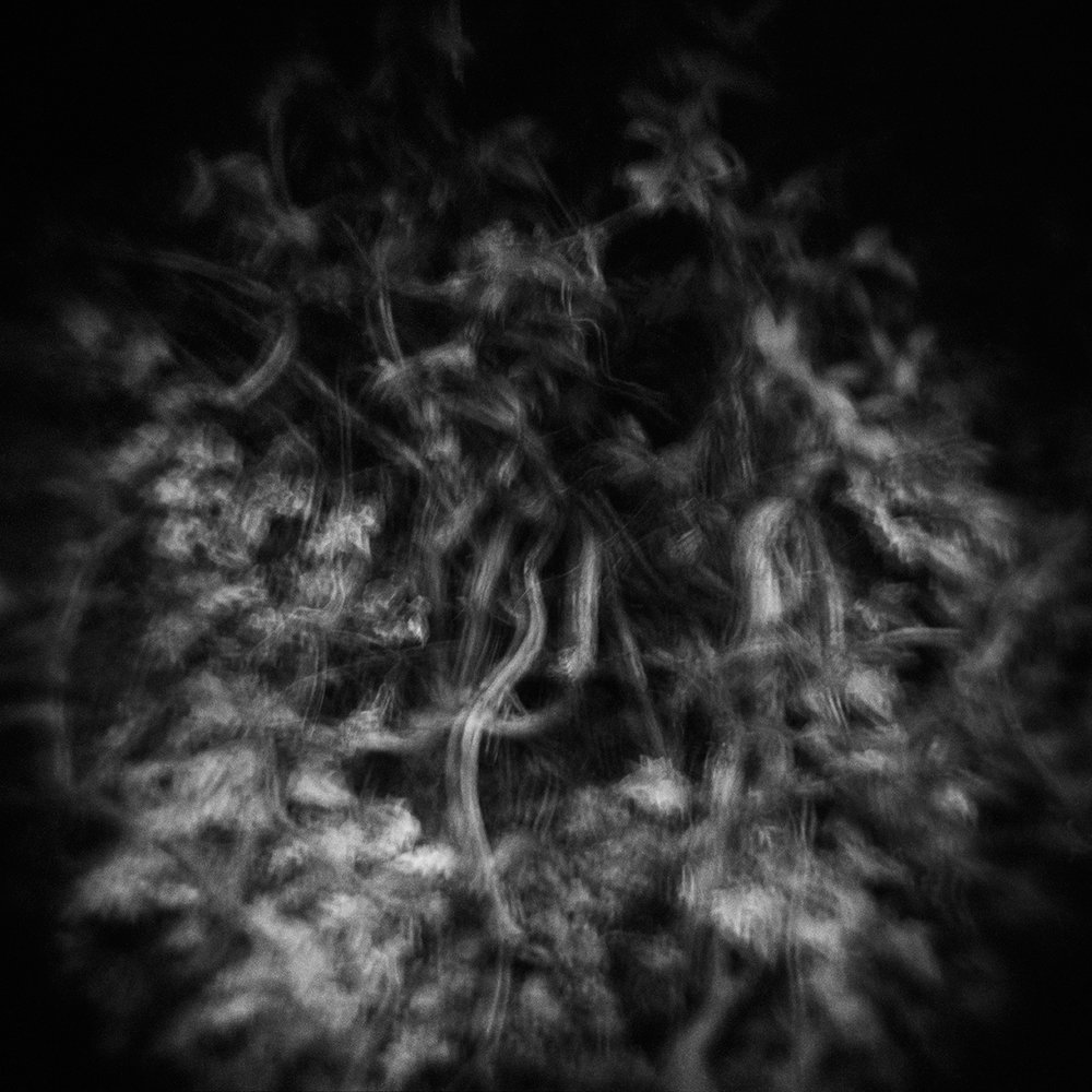 02_FRA 24 2015_2017_inkjet print_53.35 x 53.35 cm_$675.jpg