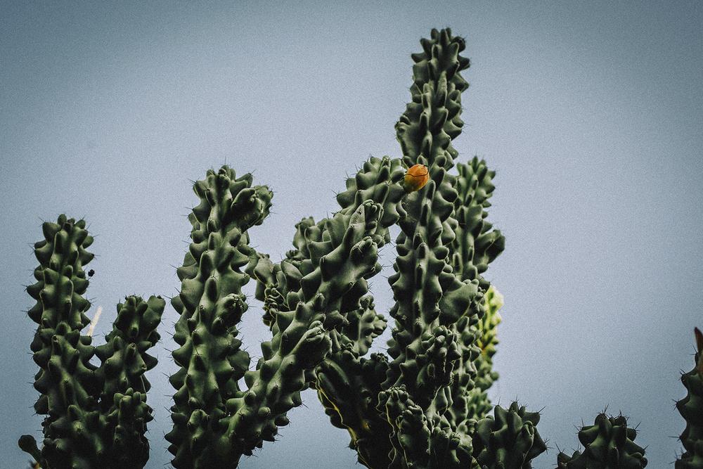 23.02.2016 I love cactus.