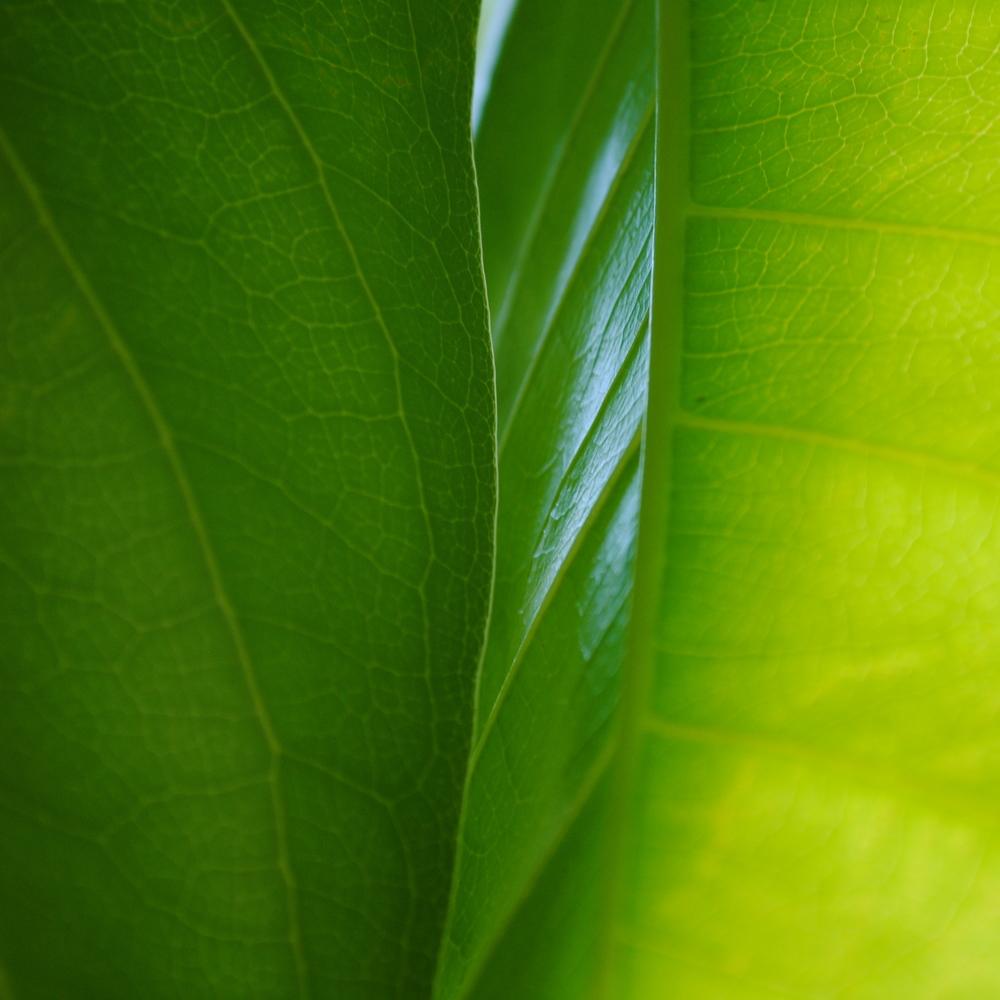 plant 4.JPG