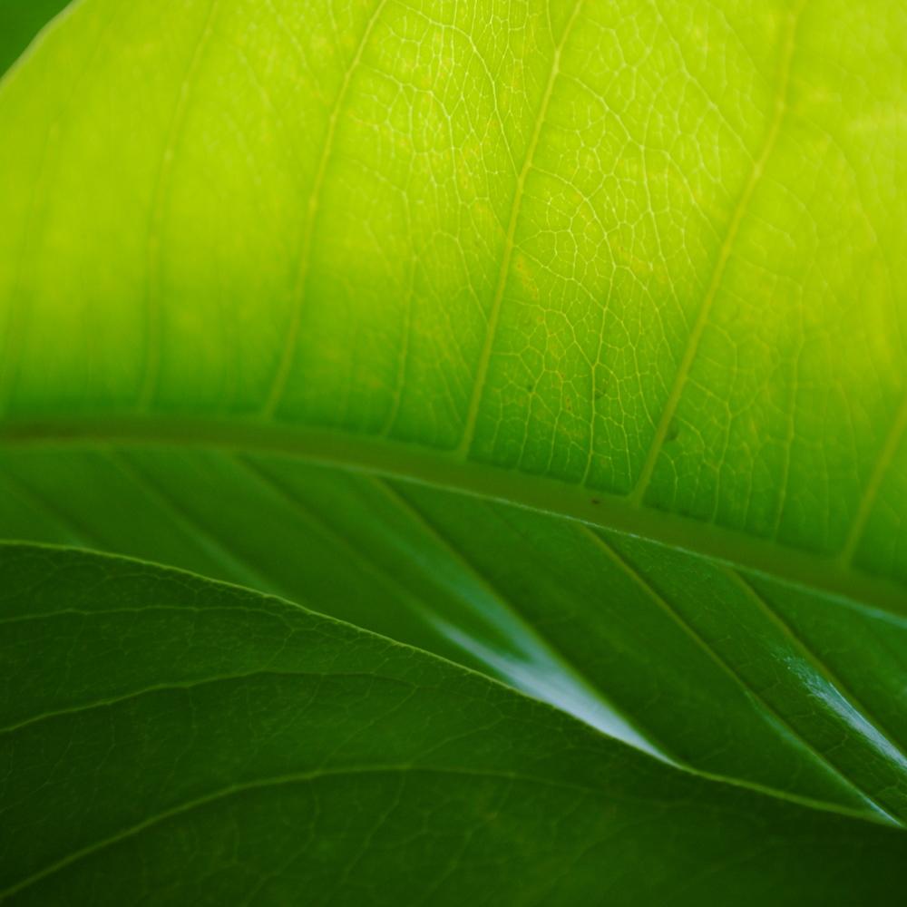 plant 5.jpg
