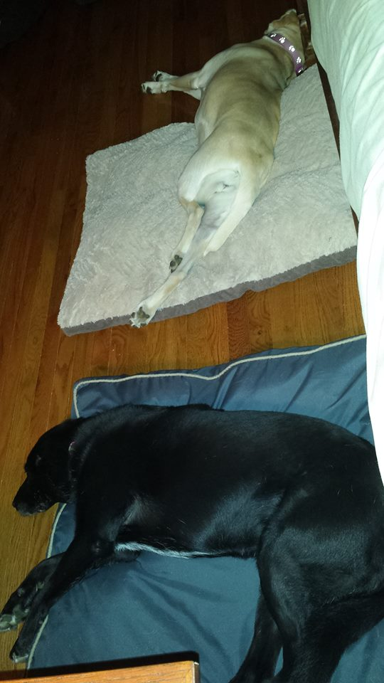 dog beds.jpg