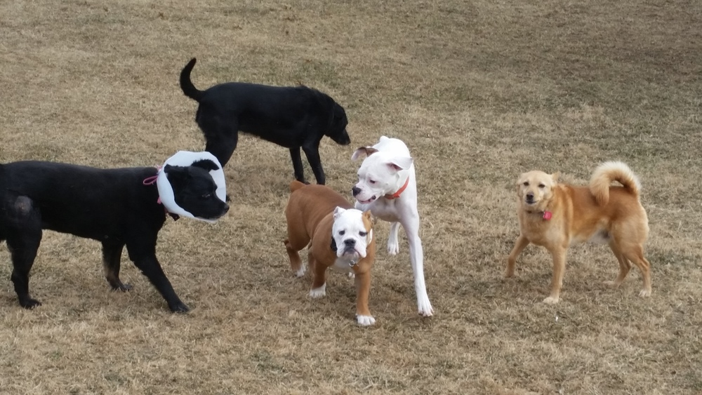Benz, Wrigley and the Gang!