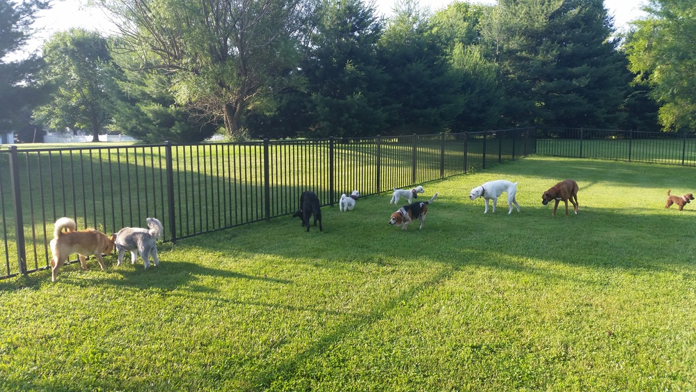 The pack enjoying the sun and room to run!