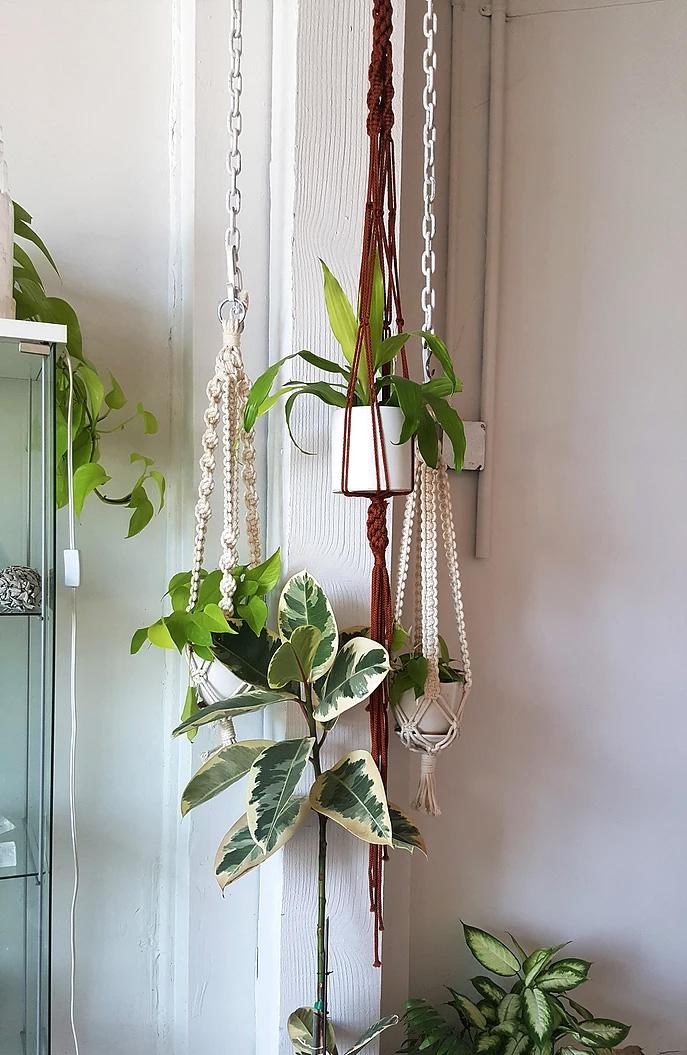 plant-hangers.jpg