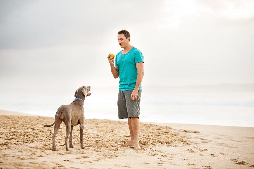 Dog behaviourist and weimaraner