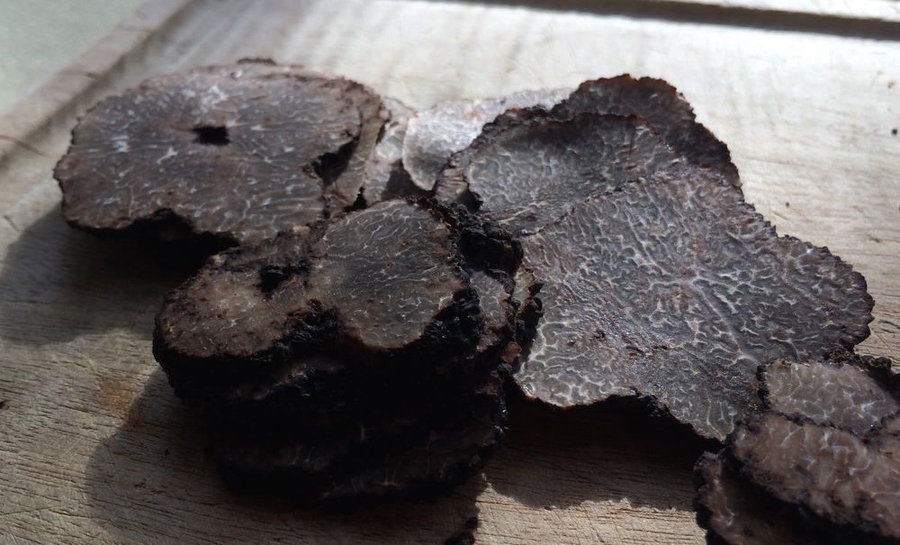 French Truffle season begins