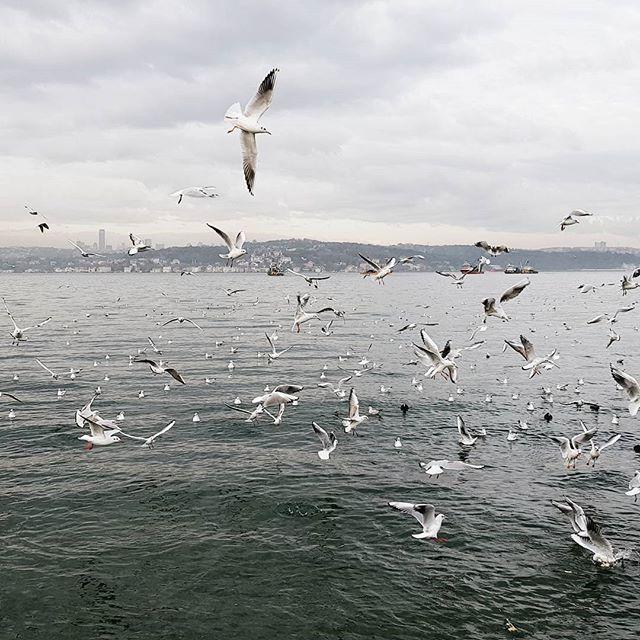 📍Beykoz . . #vscocam #istanbul #mytinyatlas #passionpassport #vscoturkey #istanbul