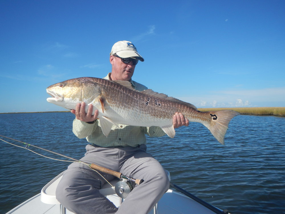 Gallery fly fishing for louisiana redfish for Fly fishing redfish