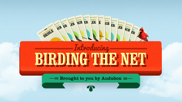 Birding the Net - National Audubon Society