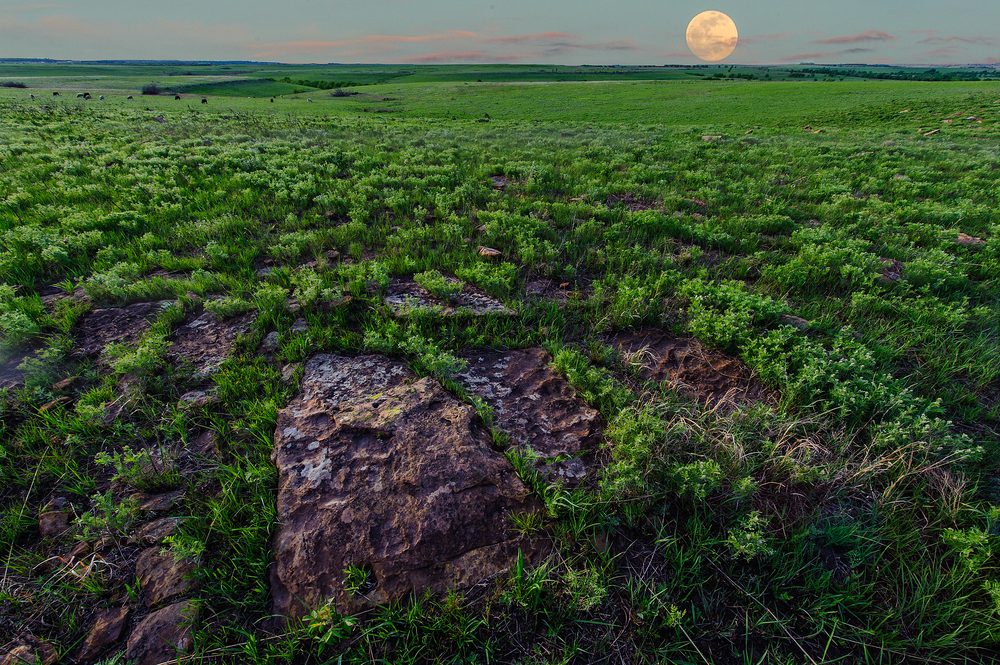 Red Buffals_Hogle__DSC6489 w moon 6489.jpg