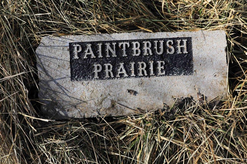 PrairiePaintbrush_s.jpg