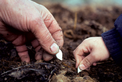 hands.planting_sm