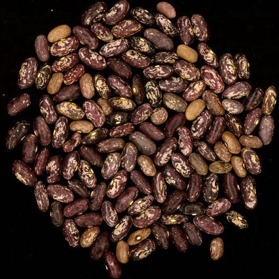 Blue Jay bean