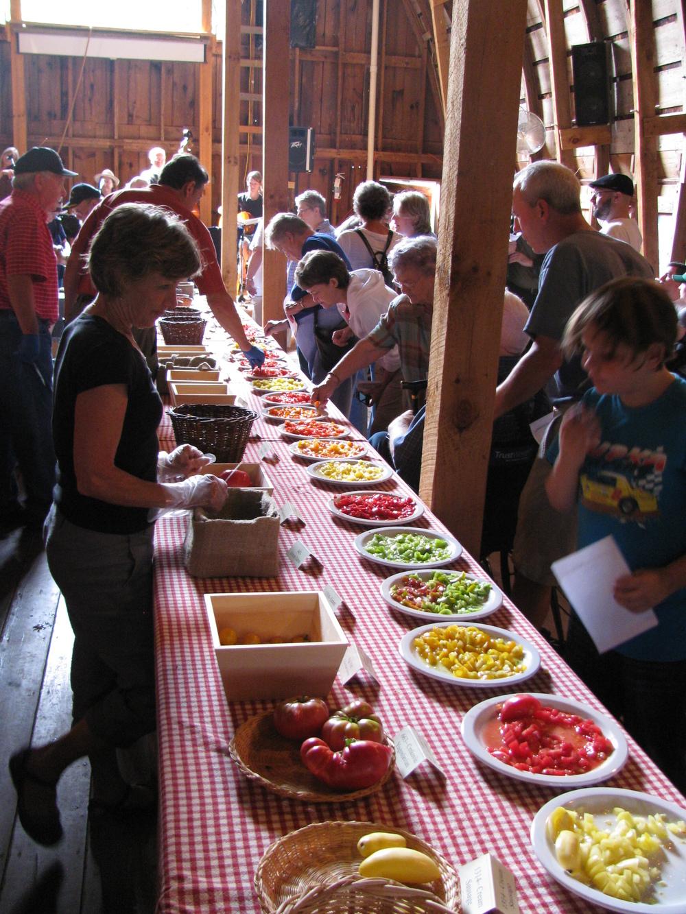 tomato tasting 2011 JT 060