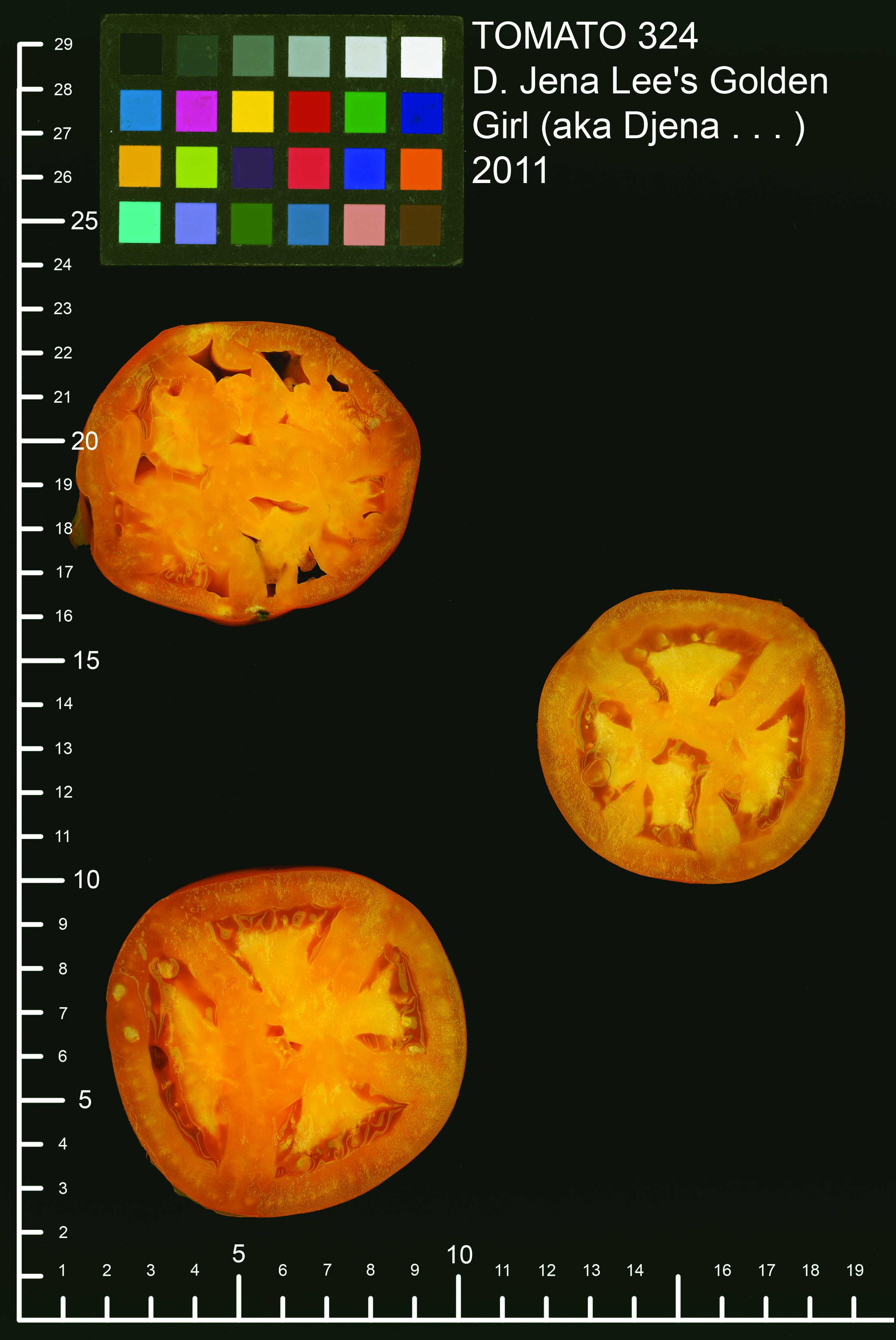 tomato scan