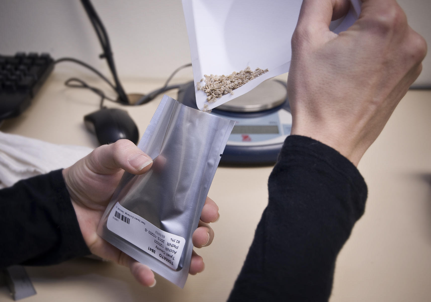 Preparing Seeds for the Svalbard Global Seed Vault