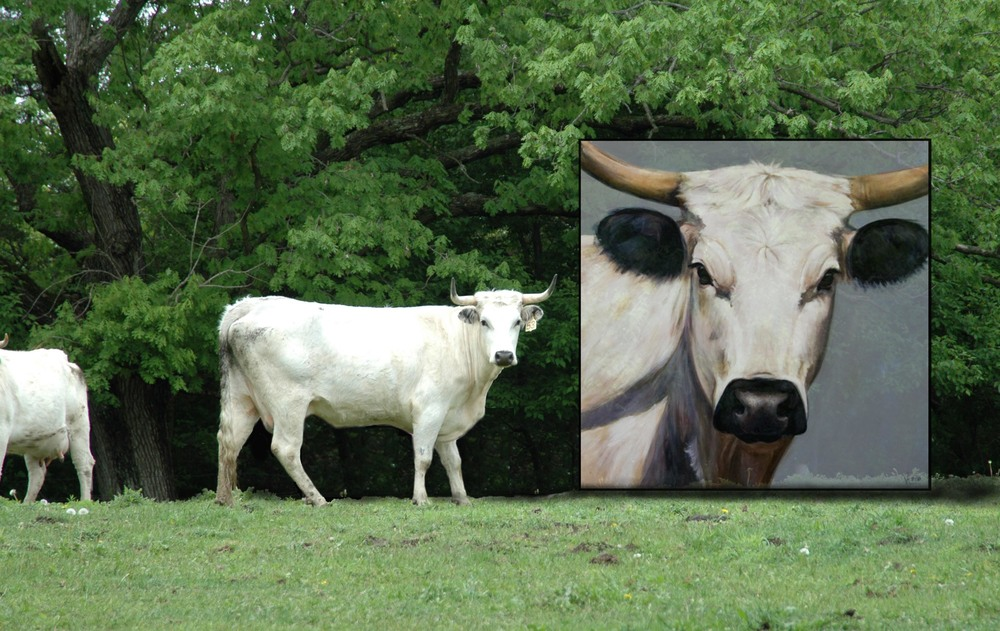 Grassfed Cow Art