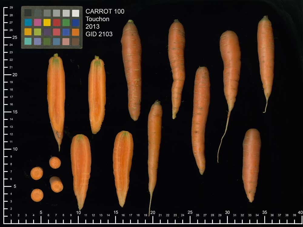 Carrot Scan