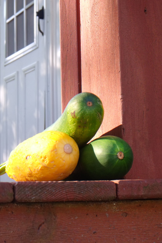 Zucchini on the porch