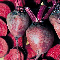 Beet-Early-Blood-Turnip