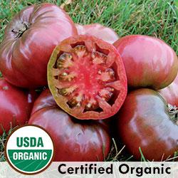 Tomato Cherokee Purple Organic