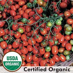 Tomato Cherry Roma Organic