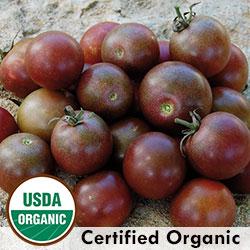 Tomato Black Cherry Organic