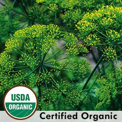 Grandma Einck's Organic Dill